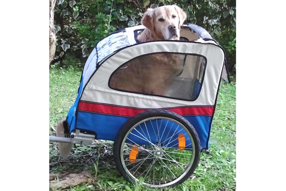 bike trailer for dog